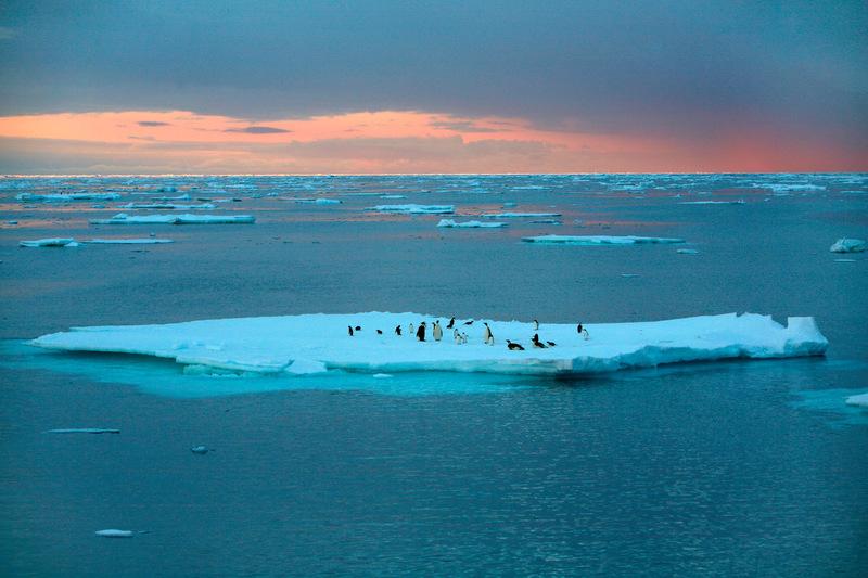 Emperor and Adelie Penguins © Greenpeace / Jiri Rezac