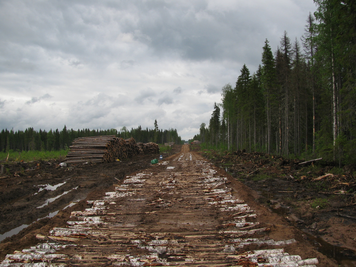 Deforestation in Russia © Greenpeace