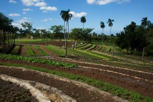 Crops on Finca Marta Farm in Cuba © Alonso Crespo / Greenpeace