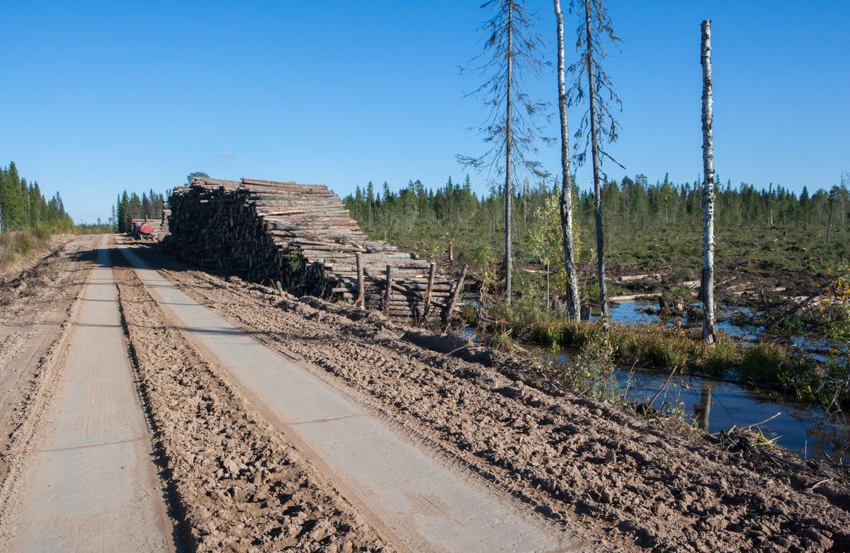 Industrial Logging in the Arkhangelsk Region, 13 Sep 2016. © Igor Podgorny / Greenpeace