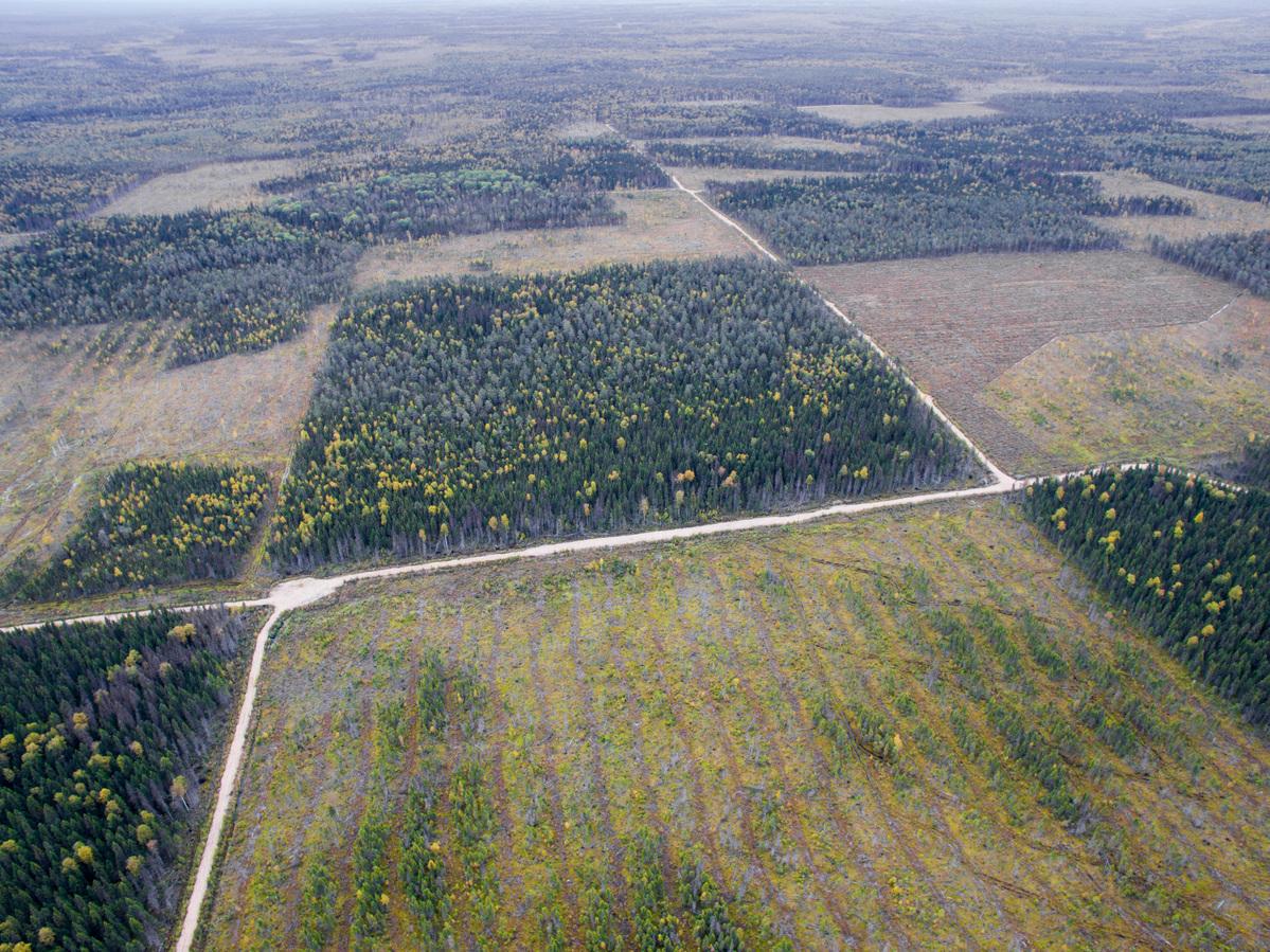 Virgin Forest Destruction in Arkhangelsk Region in Russia. © Greenpeace