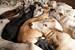 Livestock Farm in Brazil. © Ricardo Funari / Lineair / Greenpeace