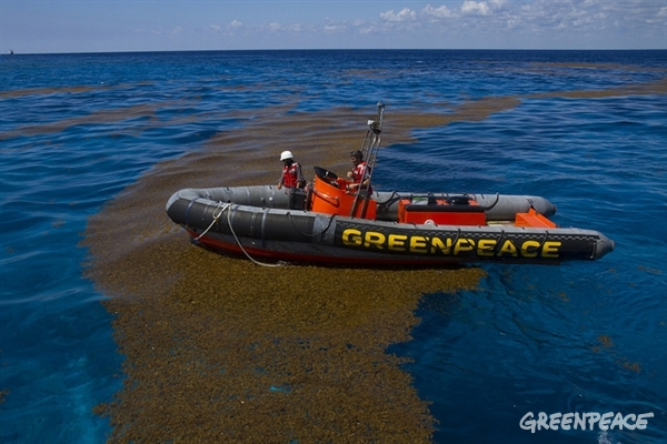 Esperanza ship also helped to document the sargasso in Quintana Roo, where continued the sampling to identify pesticides and fertilizers in the water. © Alonso Crespo/Greenpeace.