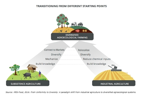 Source: iPES-Food. From Uniformity to Diversity: a paradigm shift from industrial agriculture diversified agroecological systems