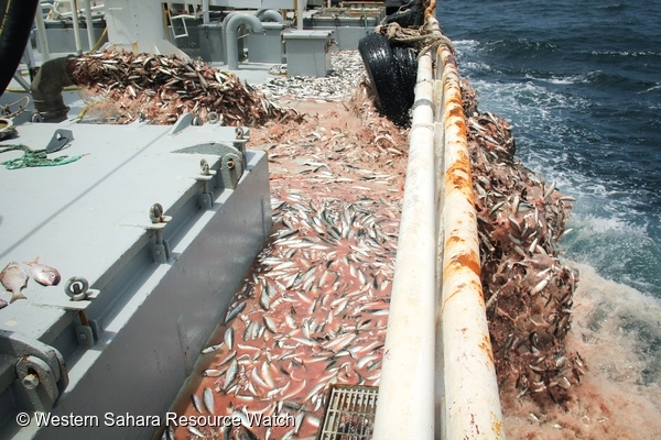 Trawler discarding 60 tonnes of sardines off the coast of Africa. 7 Jul, 2013 © Western Sahara Resource Watch