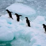 Victory! World's largest marine protected area established off Antarctica!