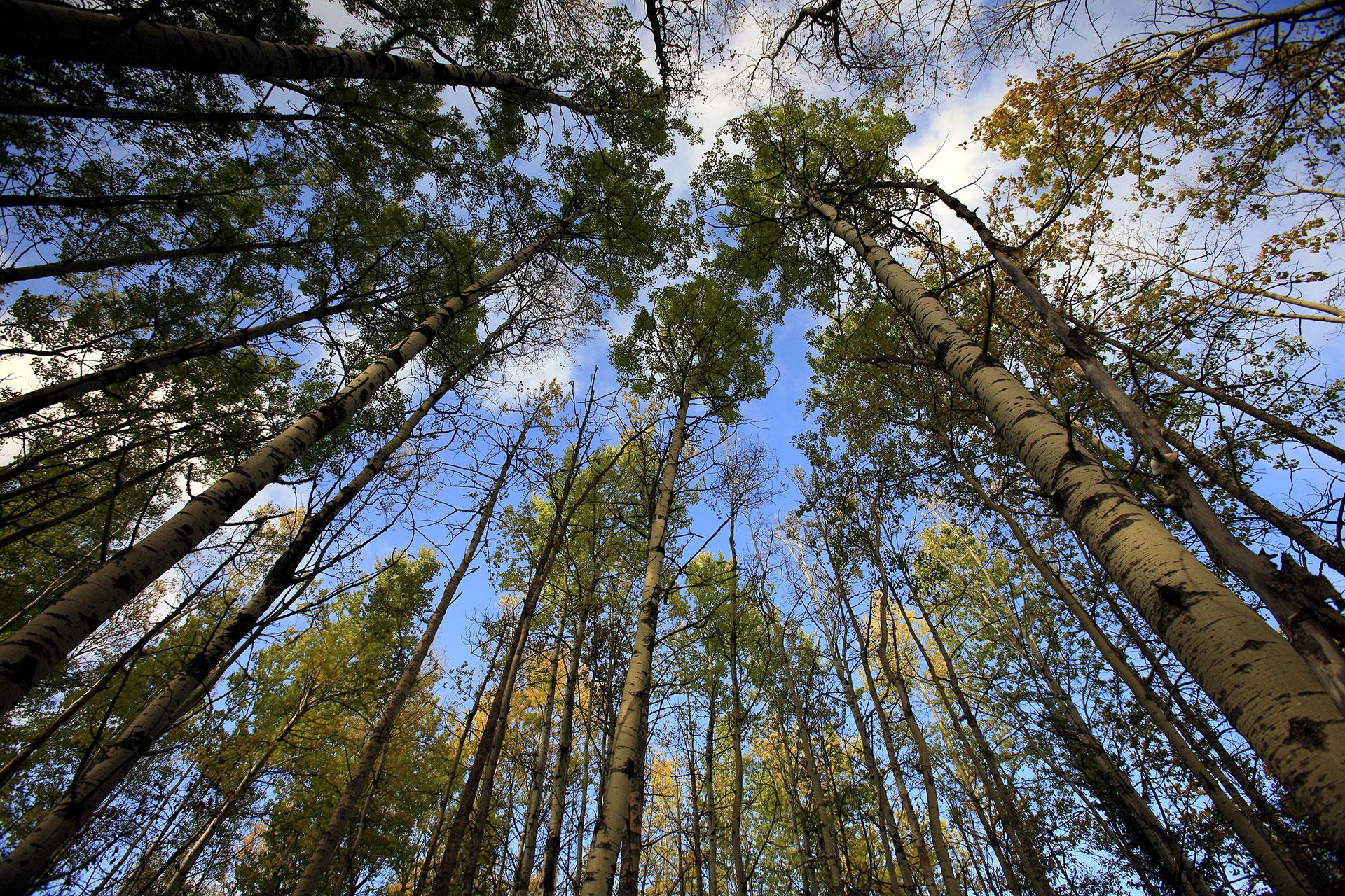 Boreal Forest in Alberta, Canada. © Jiri Rezac / Greenpeace