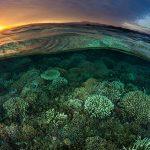 Sunrise Over Reef in Komodo National Park © Paul Hilton / Greenpeace