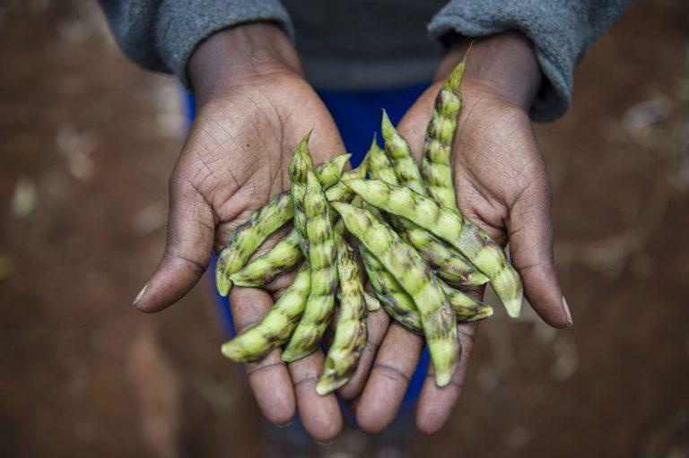 Ecological Farmer in Kenya © Cheryl-Samantha Owen / Greenpeace