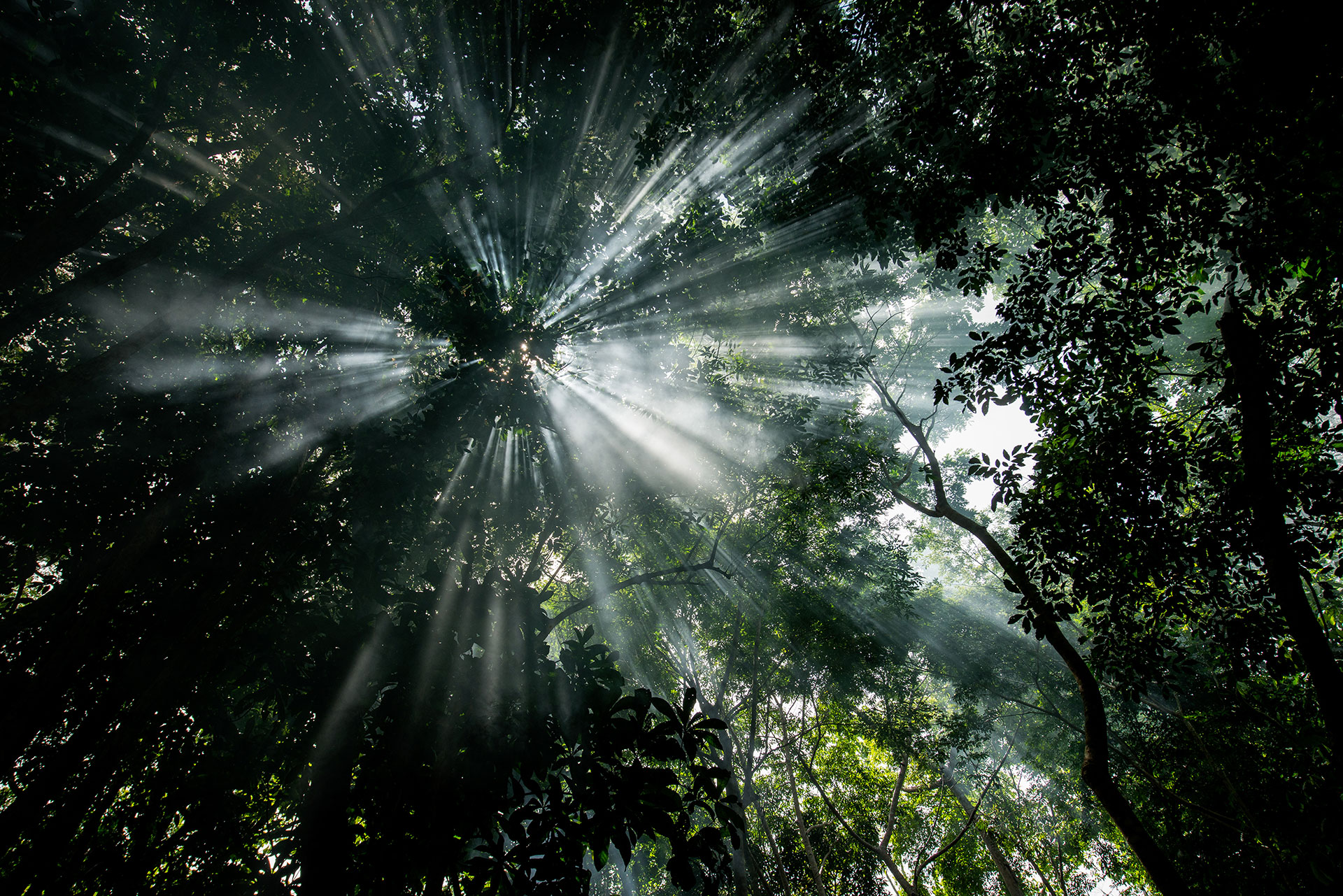More Evidence That Movement To Defend >> Protect Rainforests Greenpeace International