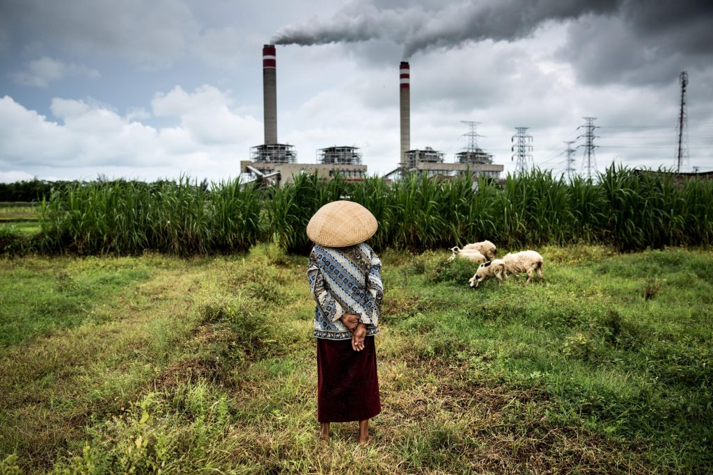 Herder and Sheep in Central Java. © Kemal Jufri / Greenpeace