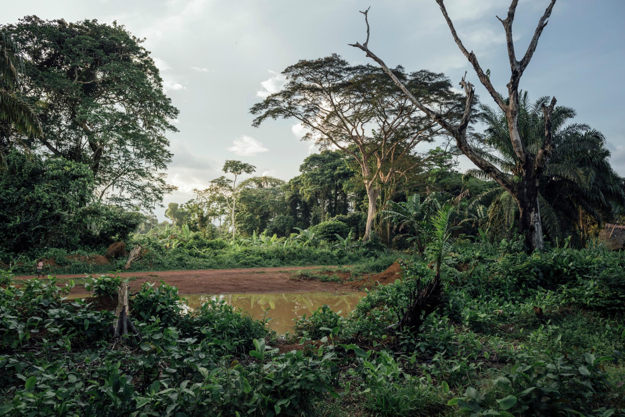 The village of Lokolama at sunset. © Kevin McElvaney / Greenpeace