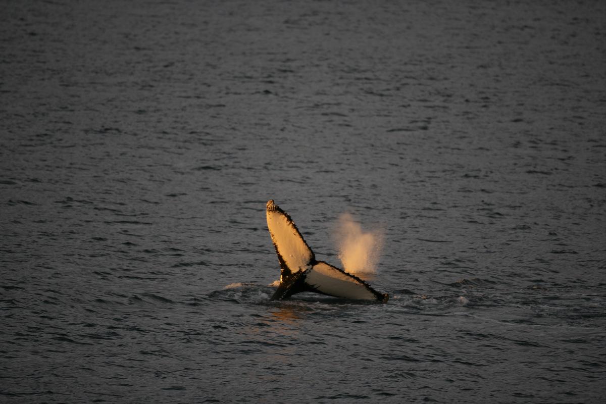 Humpback Whale in the Southern Ocean© Greenpeace / Jiri Rezac