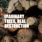How licensing fraud and illegal logging of Ipê trees are causing irreversible damage to the Amazon rainforest.