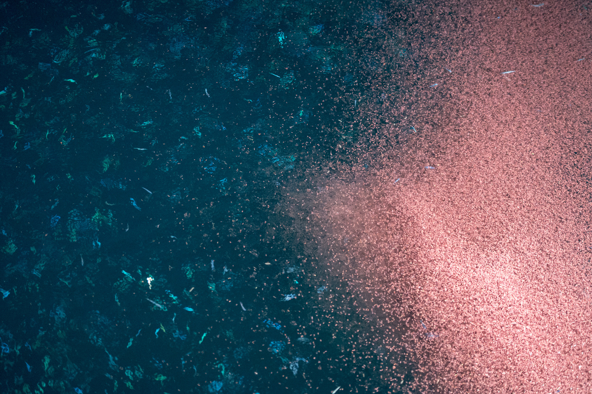 5 things you probably didn't know about krill - Greenpeace