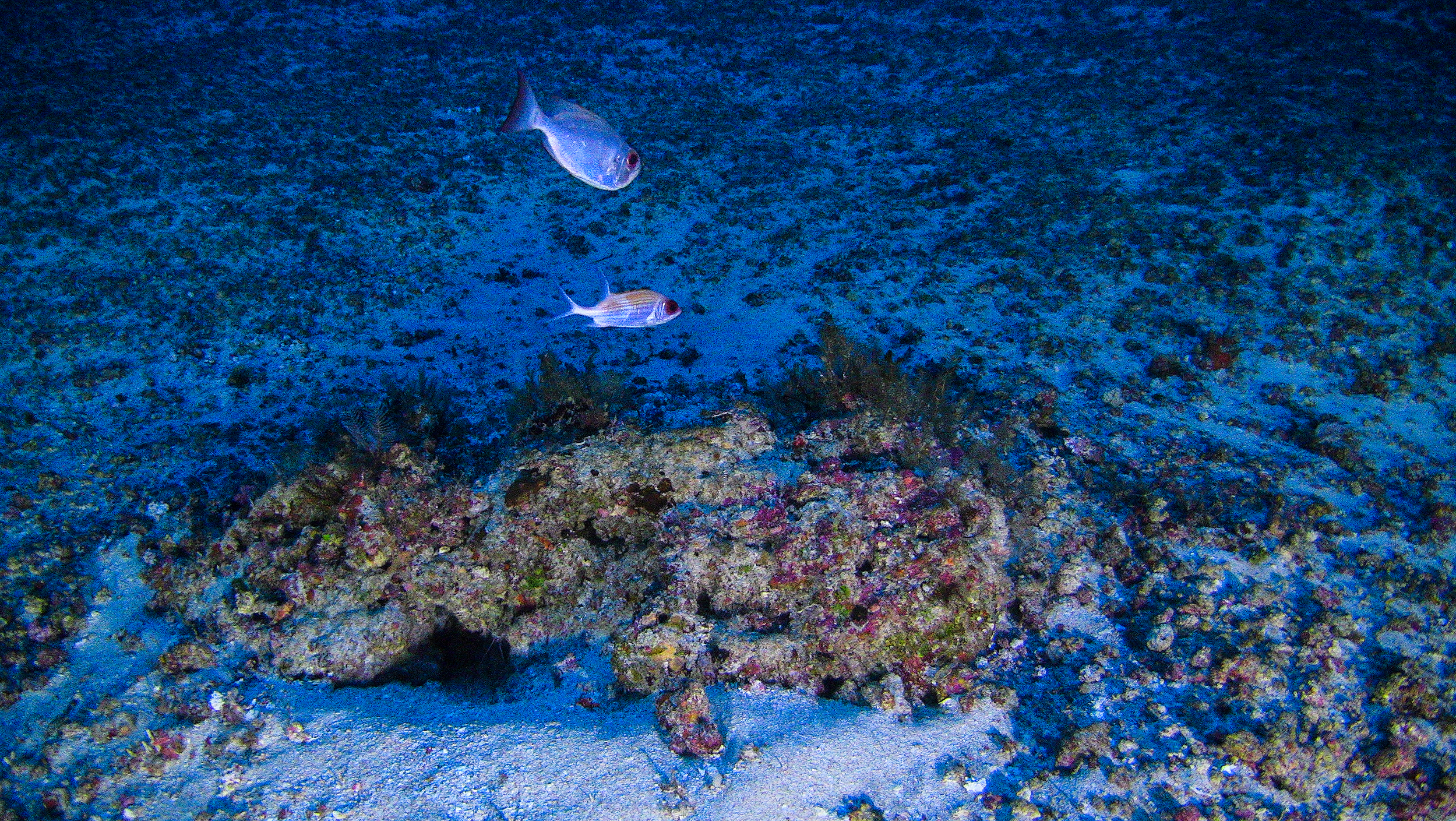 One of the first images of the Amazon Reef taken from a submarine launched from the Greenpeace Esperanza ship in 2017 © Greenpeace