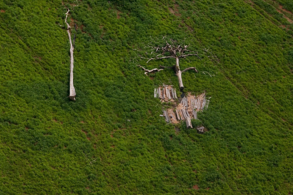 Deforested Area for Cattle Ranching in Brazil © Marizilda Cruppe / EVE / Greenpeace