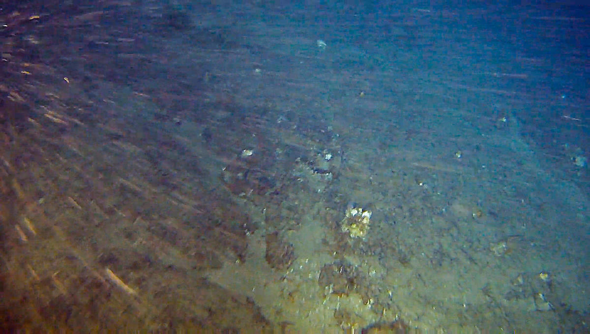 Rhodolith field covered by sponges in the Amazon Reef region. The formation is in the perimeter of Total's oil blocks, where the French company plans to drill. © Greenpeace