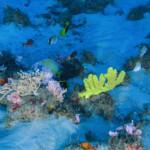 Amazon Reef. © Greenpeace