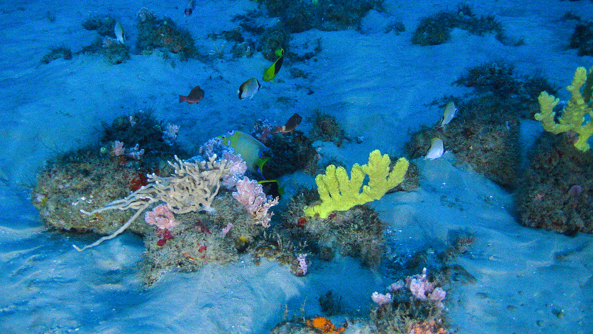 Amazon Reef. © Greenpeace