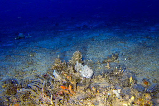 Coral formation in the Amazon Reef © Greenpeace
