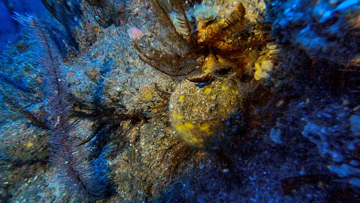 Amazon Reef in French Guiana Waters © Greenpeace
