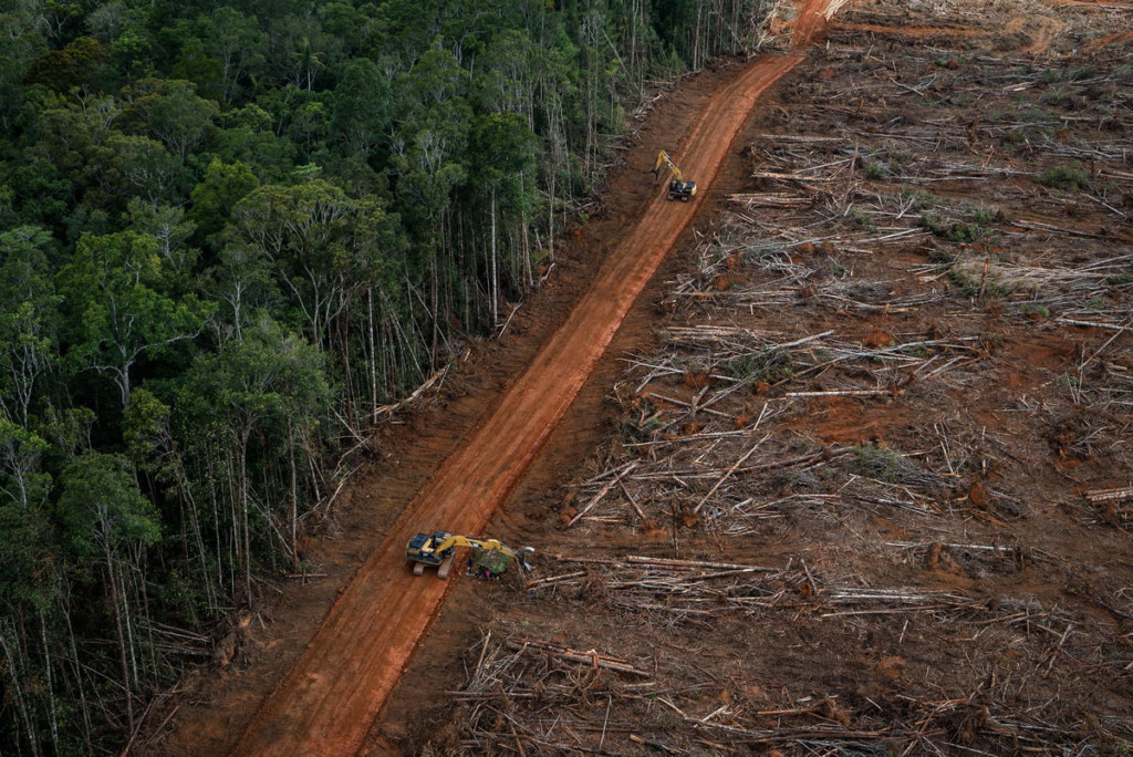 The destruction of the palm oil industry in Papua © Ulet Ifansasti / Greenpeace