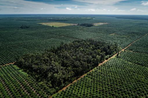 © Ulet Ifansasti / Greenpeace