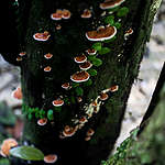 Fungi in Rainforest in West Papua © Jurnasyanto Sukarno / Greenpeace