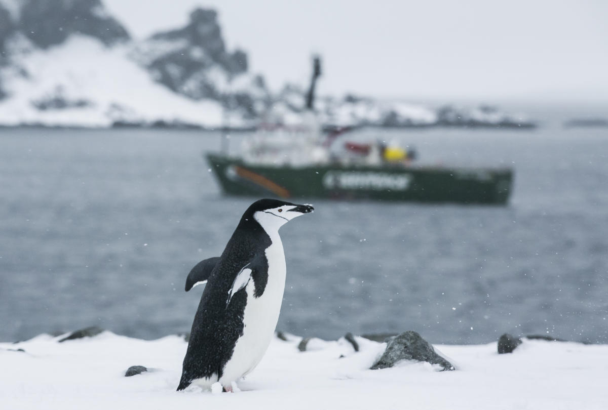 Chinstrap Penguins in the Antarctic. © Paul Hilton / Greenpeace