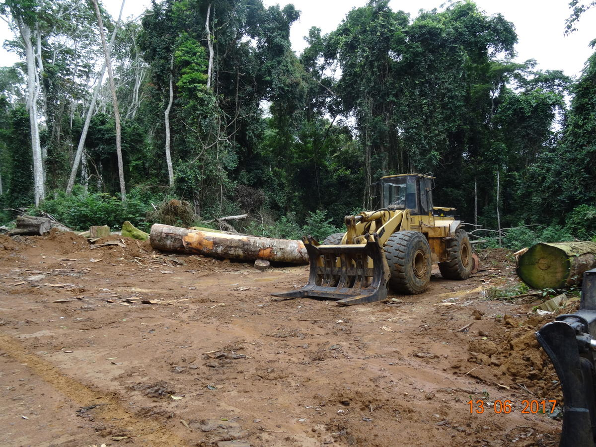 Forest Clearing in Cameroon © Nchemty Metimi Ozongashu / Greenpeace