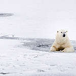 A polar bear rests in the icy water in Svalbard. (2016) © Rasmus Törnqvist / Greenpeace