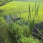 Eutrophic lake