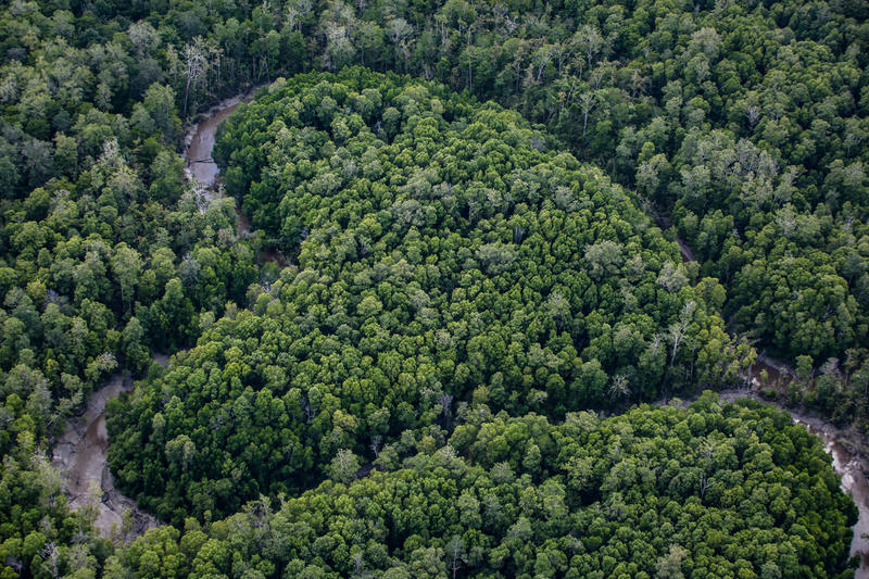 Aerial view of primary forest near the river Digul in southern Papua © Ulet Ifansasti / Greenpeace