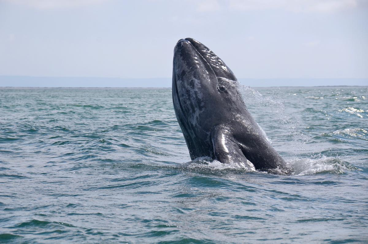 10 good reasons to not kill whales (as if you needed them