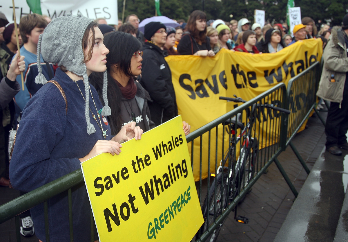 Save the Whales Rally in Wellington © Greenpeace / Marty Melville