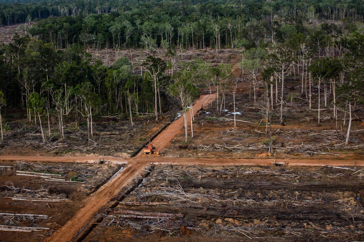 Documentation of land cover © Ulet Ifansasti / Greenpeace
