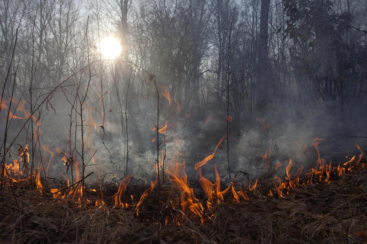 Wild Fires in Amur Region, Russia © Maria Vasilieva / Greenpeace