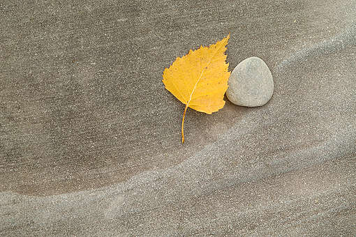Leaf and Stone in Siberia © Markus Mauthe / Greenpeace