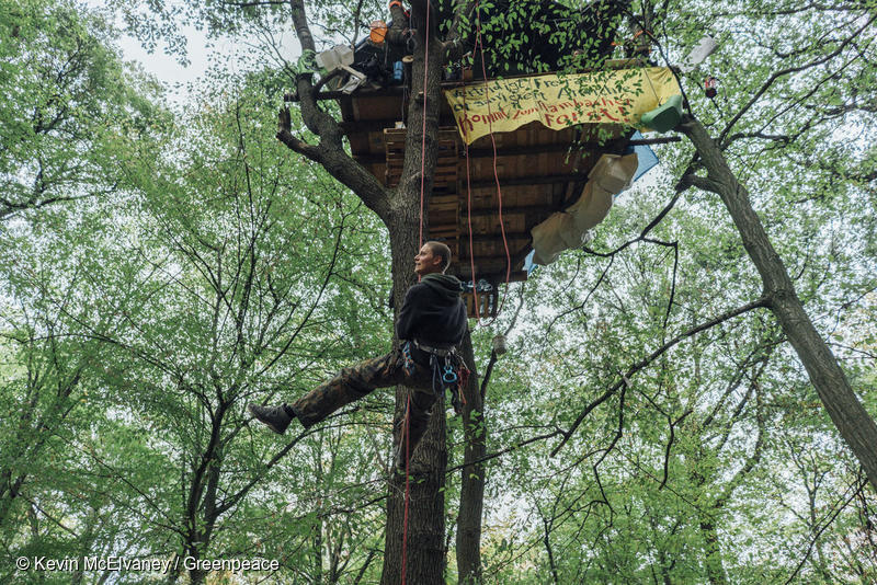 Greenpeace activists in Hambach Forest © Kevin McElvaney/Greenpeace