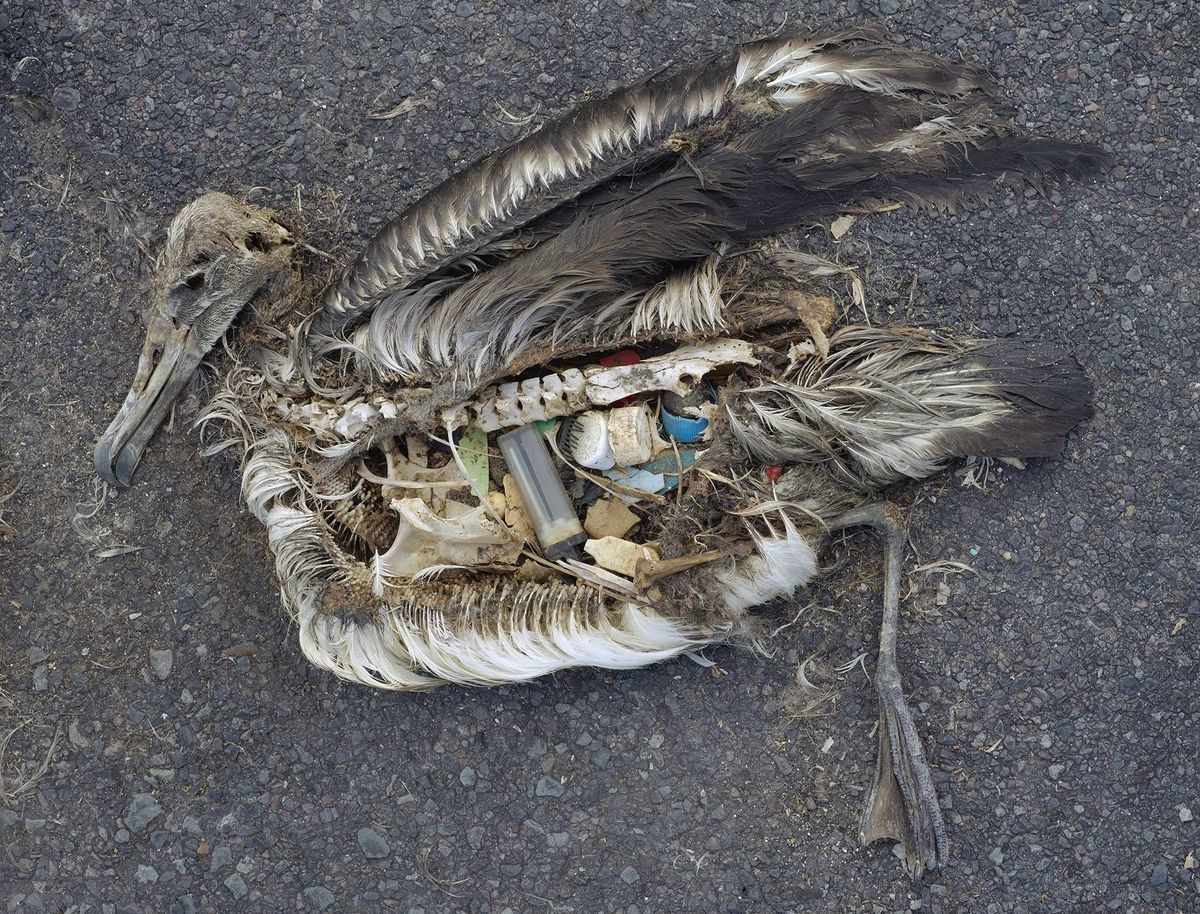Stomach Contents of Dead Albatross © Chris Jordan / CC BY 2.0