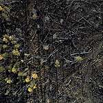 Boreal Wildfire Aftermath in Russia © Stephen Nugent / Greenpeace