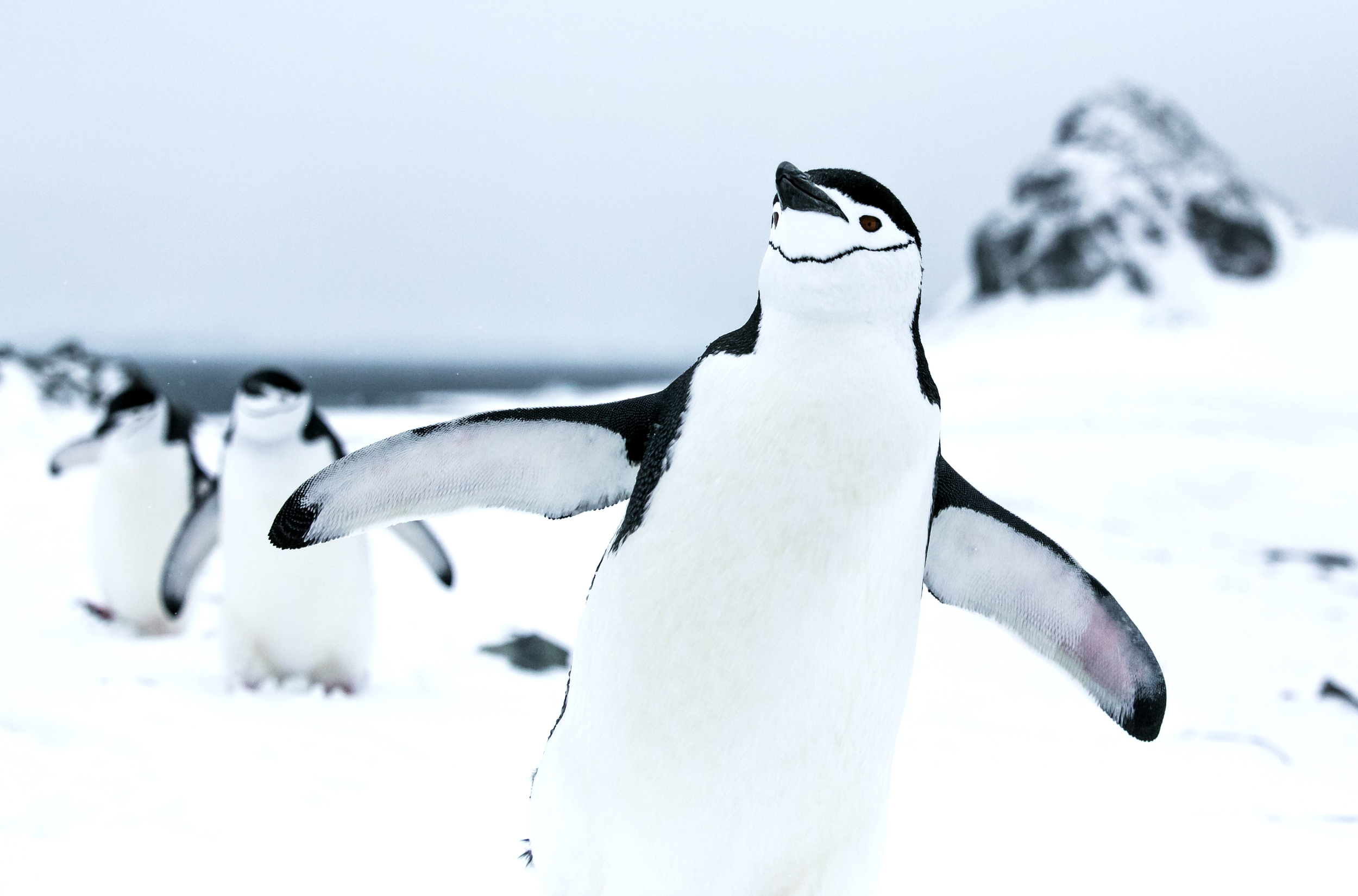 Chinstrap Penguins in the Antarctic © Paul Hilton / Greenpeace