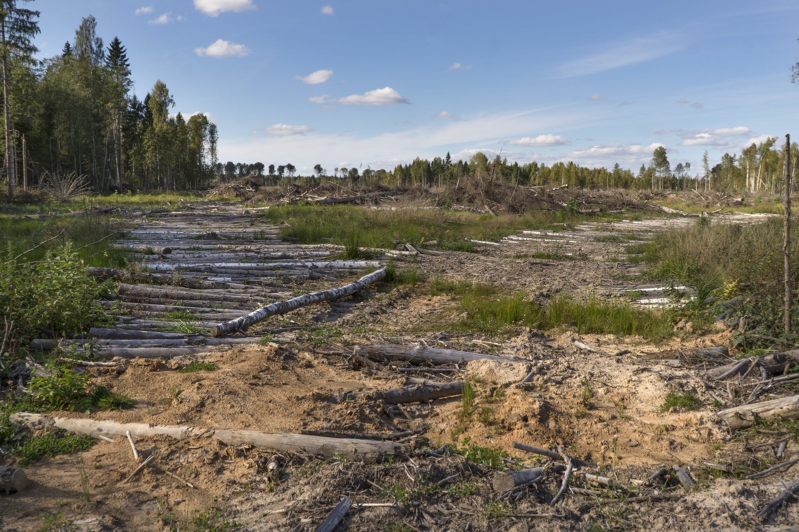 Logging from the ground in Russia © Vilen Lupachik/Greenpeace