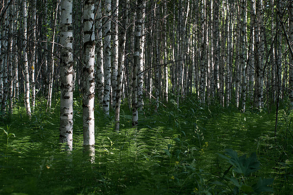 """Young """"illegal"""" forest on agricultural lands ©Yulia Petrenko/Greenpeace"""