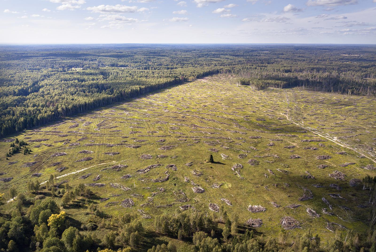 Logging in forest in Russia © Vilen Lupachik/Greenpeaec
