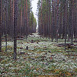 A path cut through the trees © Igor Podgorny / Greenpeace