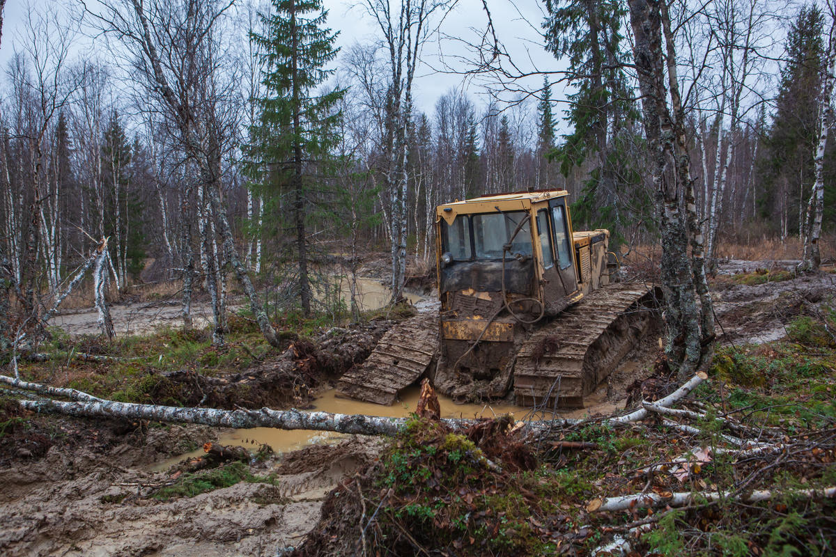 Seismic testing damage © Igor Podgorny / Greenpeace