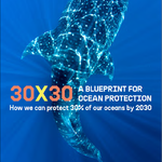 30x30: A Blueprint for Ocean Protection
