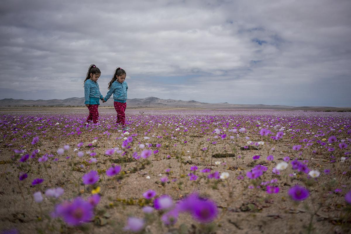 Tamara Merino's photo series 'Flowing Desert'. Taken in Atacama desert in Chile, which is often referred to as the world's driest desert. © Tamara Merino